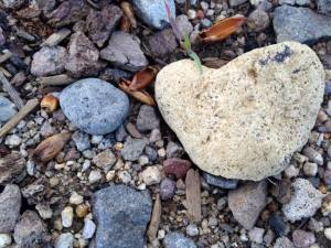 Heart Shaped Rock Love Shows Up 2017