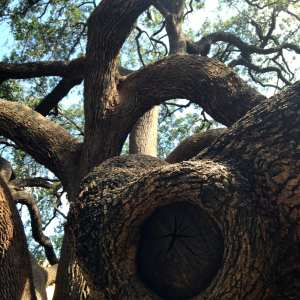 Eye of Tree Alamo with Poem March 2017