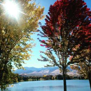Fall Trees and Leaves Memory Lane Poem November 2017