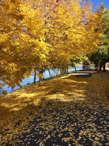 walking trail - path - scattered with yellow autumn leaves