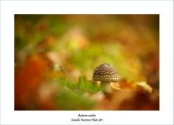 Autumn coulisse