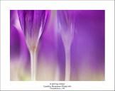 2015_03_15_0066430-A-spring-colour