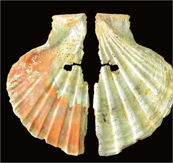 Concha que sirvió de colgante a un neandertal