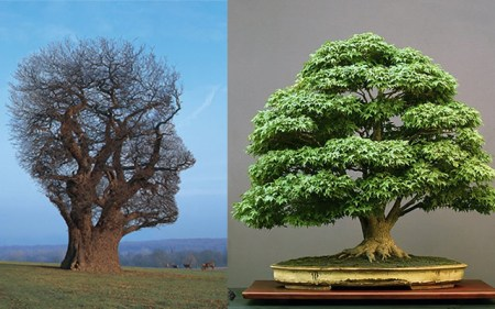 How to Mind/Mend a True/Tree Story