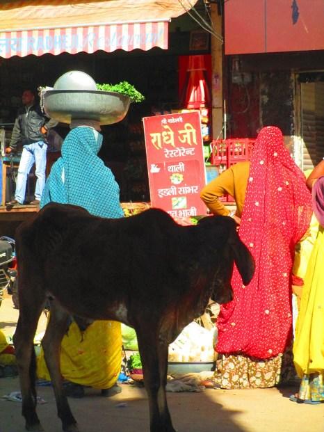 Pushkar (72)
