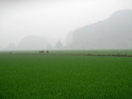 Ninh Binh (110)