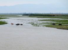 Ayeryawady River (64)