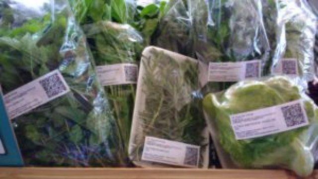 Caminho do produtor é um software de gestão para produtores de hortaliças simples e eficiente, com foco na gestão e na rastreabilidade vegetal.