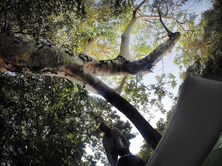 Desviando das árvores no Rio Formoso
