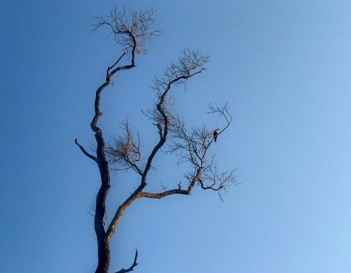 Tucano observa a prancha de cima da árvore