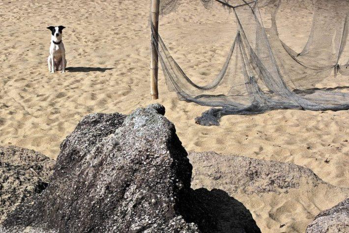 cachorro na praia pouso