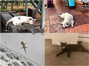 バンコクの暑そうな犬、猫、トッケー