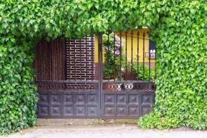 緑に、囲まれた格子戸