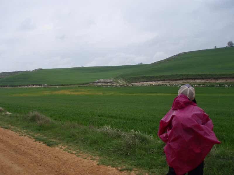507カミーノメセタの大地の麦畑1