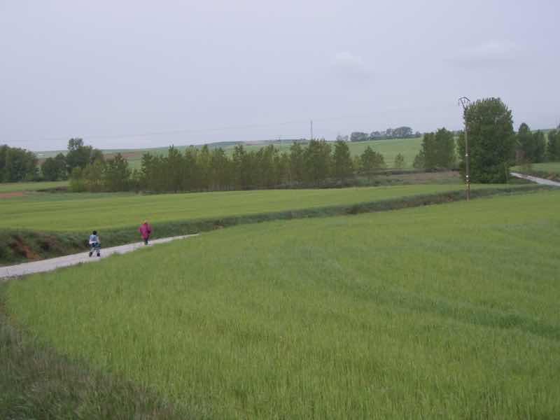 513 サアグーン 雨中、麦畑 向こう1.2 サンティアゴ巡礼