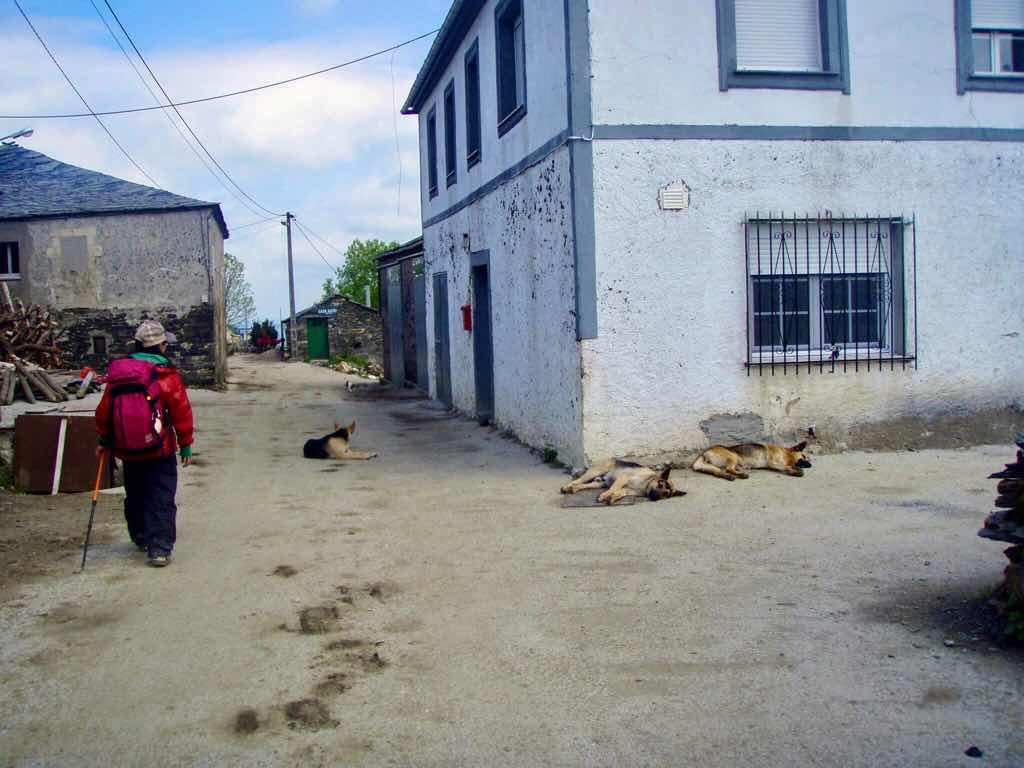 528 カミーノ トリカステーリャ ブチ犬3匹 1