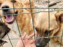 530 スペイン巡礼 サモス 田舎道 犬2匹