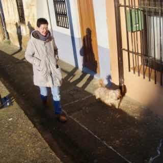 514 スペイン巡礼 camino 犬散歩