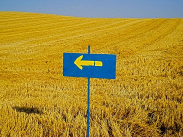 Camino-arrow-in-gold-field-small