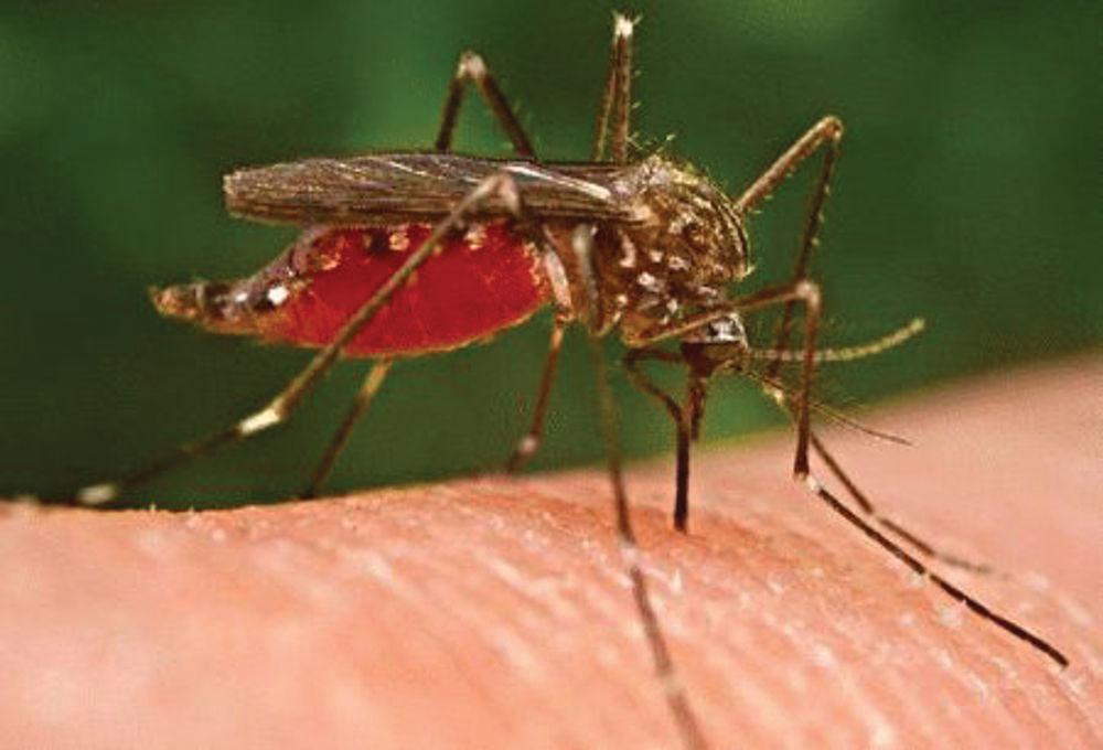 ¡Peligroso Virus!  Aquí Primer caso del virus del Nilo Occidental en Nuevo México