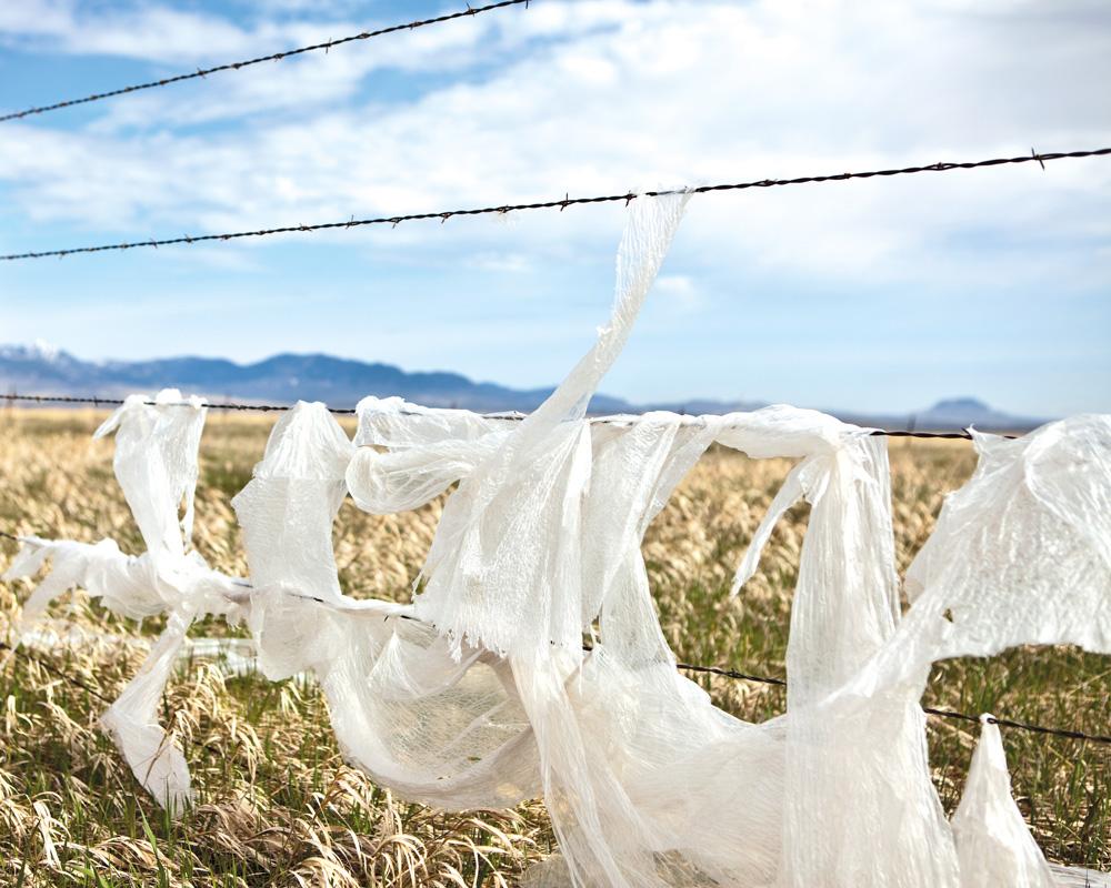 Buscan reducir uso de bolsas de plástico Encuesta en español de Las Cruces explora ideas