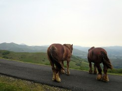 Blocking the path, looking at the view. (These horses were HUGE!)
