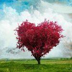 Osho: L'amore  e il dolore…quando l'amore mette le ali e il cielo infinito fa paura…
