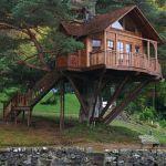 Vivere sugli alberi ….un esperienza fuori dal comune…