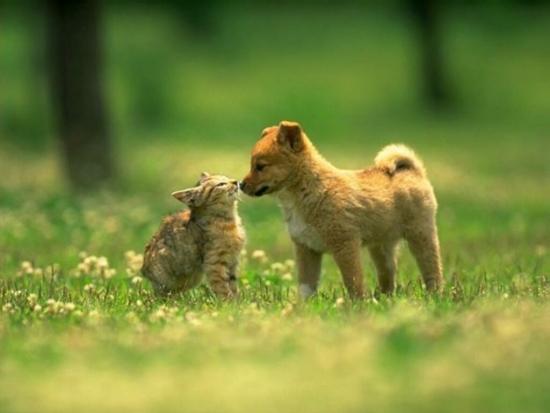 consumo-cani-e-gatti