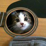 Anche i gatti hanno la loro musica!!!