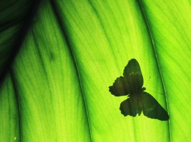 farfalla-800x599