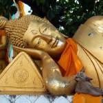 LA LEGGENDA BUDDISTA SUI GATTI…(reincarnazione e gatti)