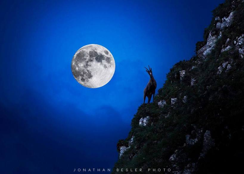full moon with goat