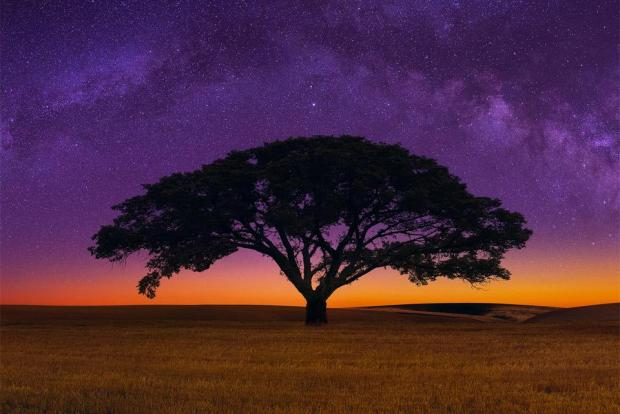 960_supx-african-savannah-tree