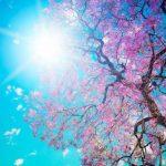 La PRIMAVERA è ALLE PORTE …LASCIA CHE SIA di Cammina nel Sole