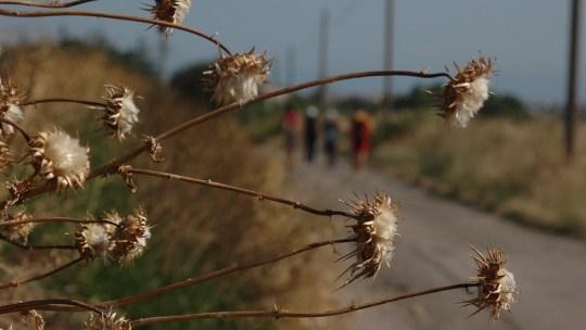 Il Cammino di San Timoteo | Cammini d'Italia