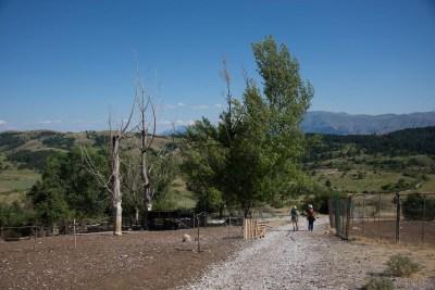 Cammino Terre Mutate Tappa 13 Mascioni - Collebrincioni (97)