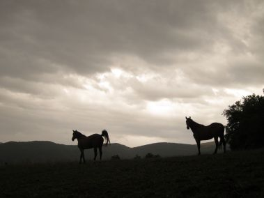 Cammino Terre Mutate Tappa 3 Camerino Fiastra cavalli liberi