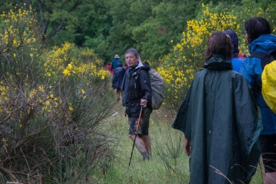 Cammino Terre Mutate Tappa 3 Camerino Fiastra tra le ginestre