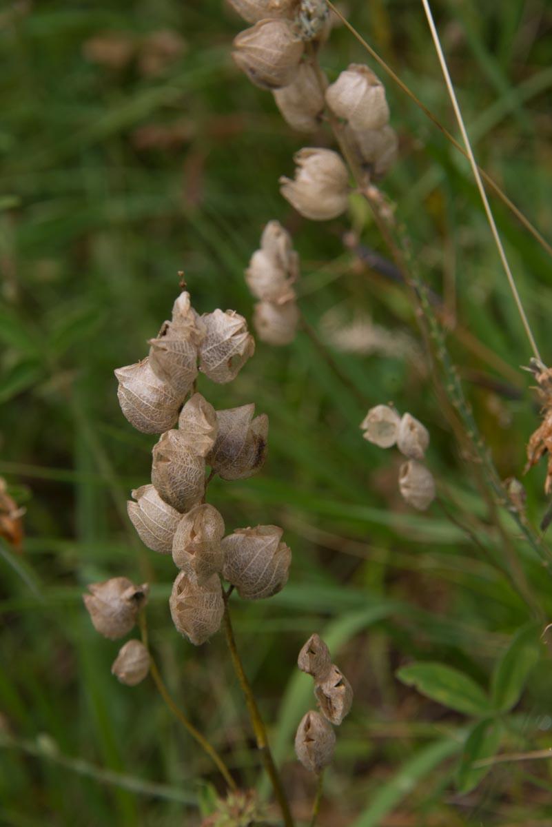 Cammino Terre Mutate Tappa 4 Fiastra Ussita la biodiversità del parco dei sibillini (4)