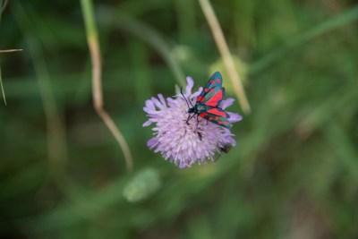 Cammino Terre Mutate Tappa 4 Fiastra Ussita la biodiversità del parco dei sibillini