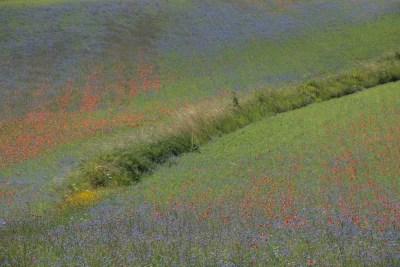 Cammino Terre Mutate Tappa 7 Norcia - Castelluccio di norcia (32)