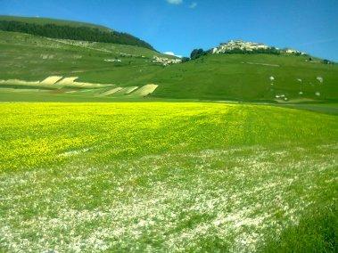 Cammino Terre Mutate Tappa 8 Castelluccio di Norcia - Arquata del Tronto 2 (1)