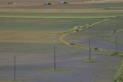 Cammino Terre Mutate Tappa 8 Castelluccio di Norcia - Arquata del Tronto (30)