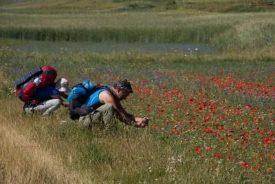 Cammino Terre Mutate Tappa 8 Castelluccio di Norcia - Arquata del Tronto (50)