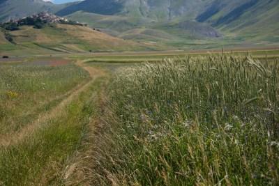 Cammino Terre Mutate Tappa 8 Castelluccio di Norcia - Arquata del Tronto (53)