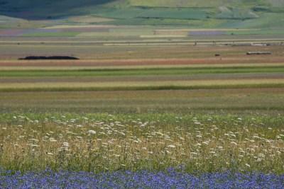 Cammino Terre Mutate Tappa 8 Castelluccio di Norcia - Arquata del Tronto (58)