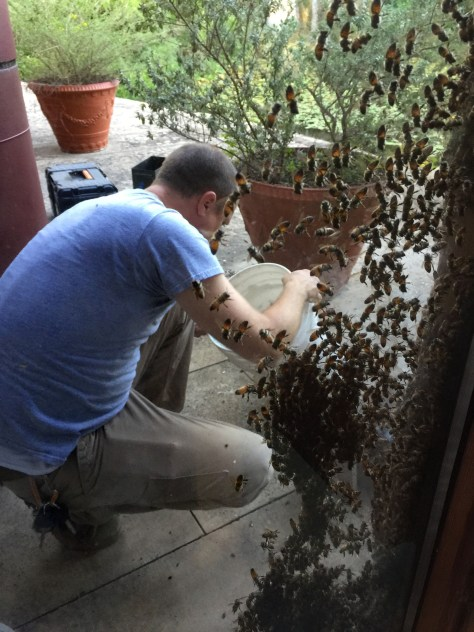 Checking for the queen in a bucket of bees