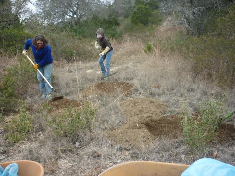 spreading soil for wildflower seeds