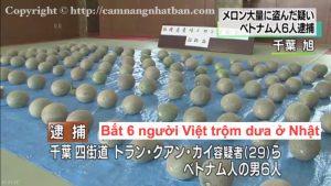 Bắt 6 người Việt ăn trộm 112 quả dưa ở Nhật Bản